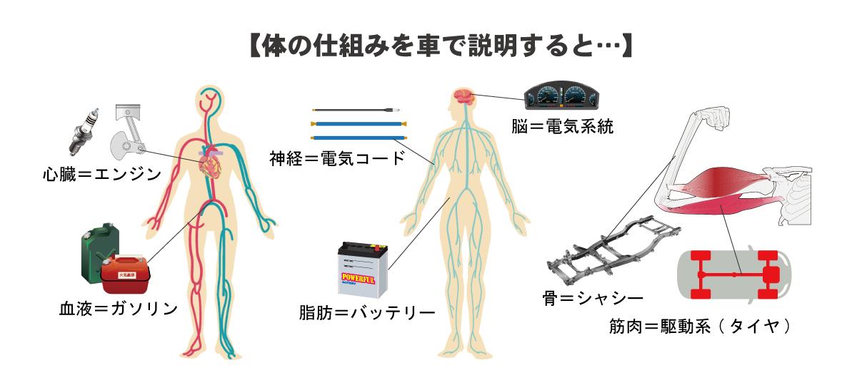 身体の仕組み